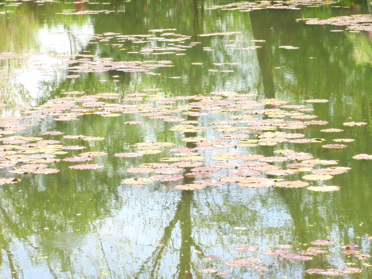 Impressions of Giverny - Lily Pond 14