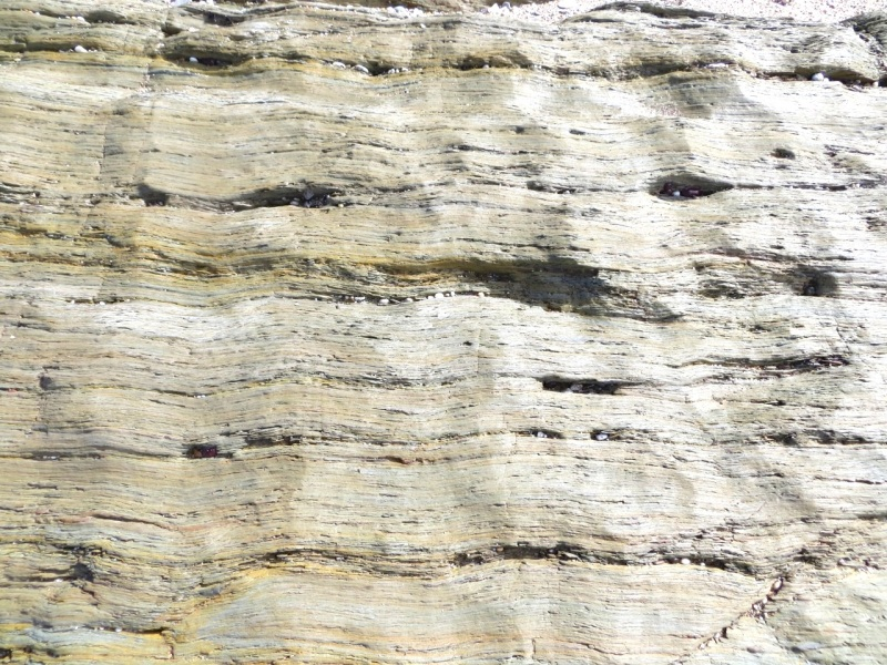 Thurlstone Rock close-ups, Devon 01