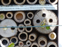 Bee box with leaf-cutter bees, Dorset