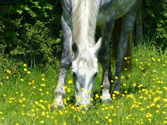 Darcy & Buttercups 2