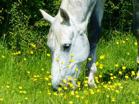 Darcy & Buttercups 3