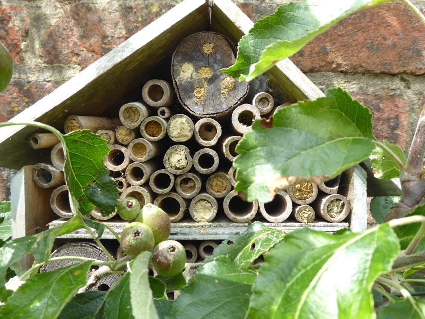 Bee House & denizens, Dorset