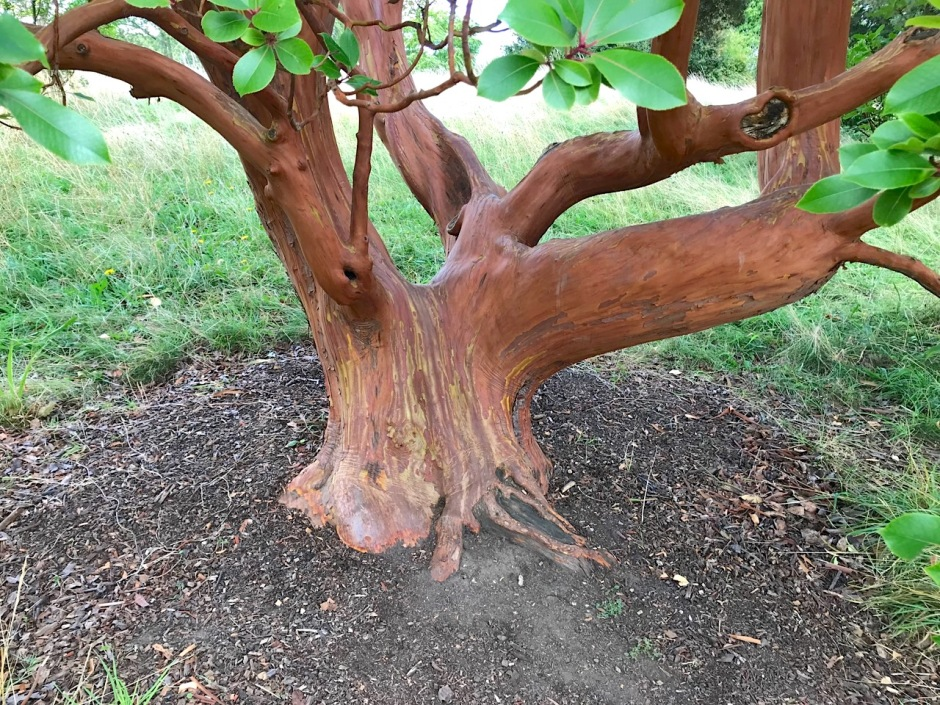 Unusual Tree, Greys Court Oxfordshire