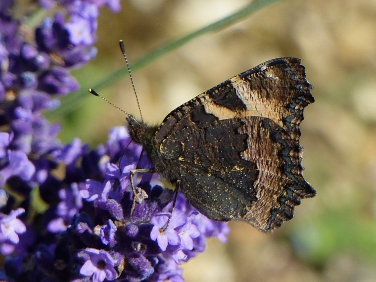 Butterfly / TL (Keith Salvesen)
